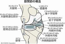膝関節 写真 に対する画像結果
