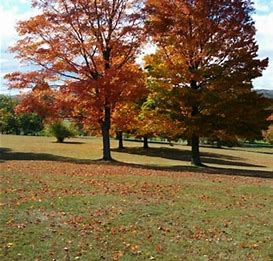 Image result for Walnut Hill Park New Britain CT