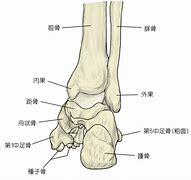 足の骨格 に対する画像結果