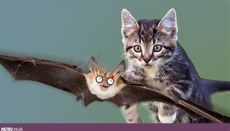 Bat Flies From London to Russia – and Gets Killed by a Cat
