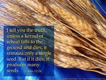 Image result for John 12 24-25