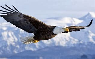 Image result for free pics about MOUNT UP ON WINGS LIKE EAGLES