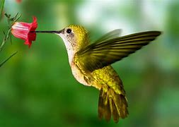 Image result for free picture of hummingbird