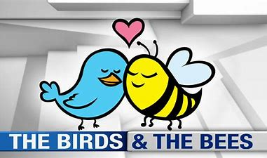 Image result for birds and the bees