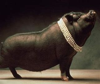 Image result for casting pearls before swine images
