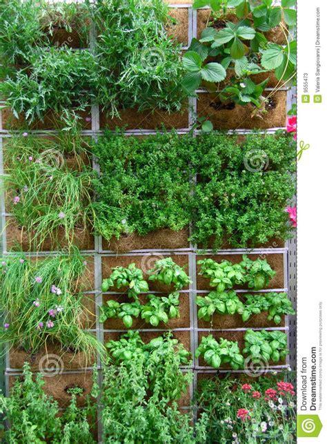 vertical garden stock image image of farming nature