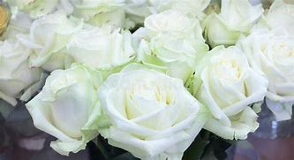 Image result for BEAUTIFUL WHTE ROSES & PEARLS