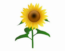 Image result for sunflower cartoon
