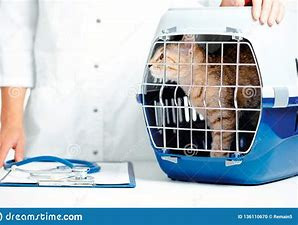 Image result for royalty free picture of kitten in a carrier
