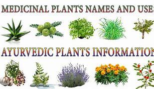 Image result for medecine we find from plants