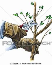 Image result for royalty free picture of pruning