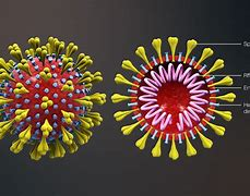 Resultado de imagen de covirus 19