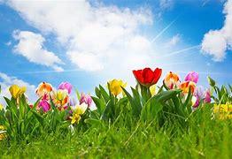 Bildergebnis für Frühling
