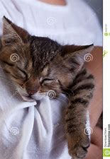 Image result for royalty free picture of kitten sleepingh
