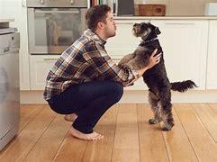 Afbeeldingsresultaten voor praten tegen hond