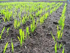 Image result for fertile soil