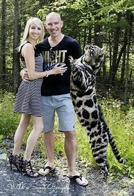 Image result for worlds biggest bengal cat
