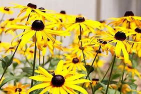 Image result for texas native plant photos