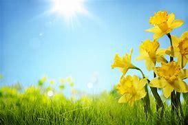 Resultado de imagen de foto primavera