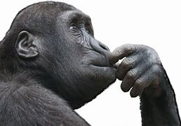Image result for iamges of thoughtful apes