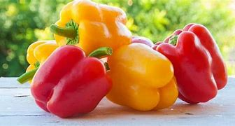 Image result for bell peppers images
