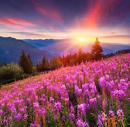 Image result for sunrise with flowers