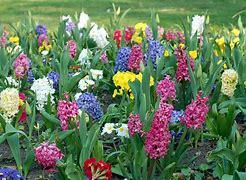 Afbeeldingsresultaten voor voorjaarsbloemen