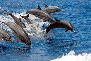 Image result for dolphins leaping