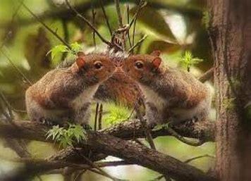 Résultat d'images pour images merveilleuses bon jeudi animaux ecureils