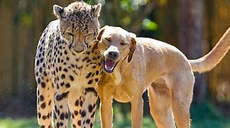 Image result for free pics of animal friends