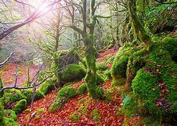 Resultado de imagen de fotos de otoño de paisajes SELVA DE IRATO