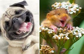 Image result for free pics of animals laughing