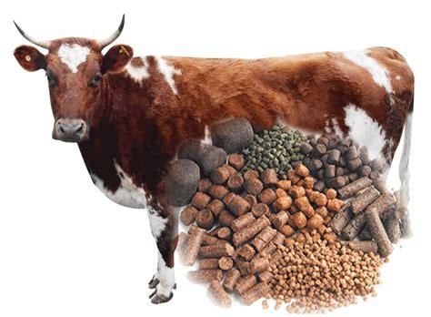 CATTLE FEED PELLETS MAKING GUIDE ECOCHICKS POULTRY LTD