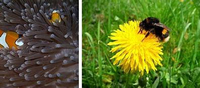 Image result for free images of symbiosis
