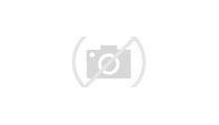 Image result for animal dreams logo