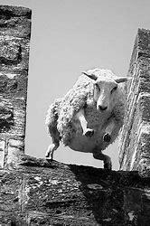 Résultat d'images pour image mouton panurge rigolote