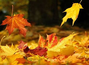 Image result for free images of falling leaves