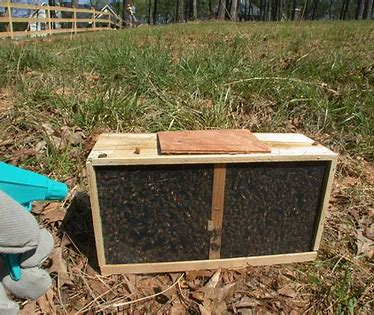 Image result for open license honey bees packages