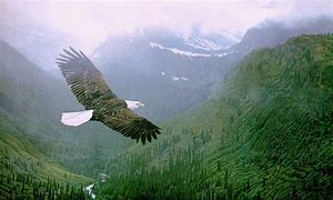 Image result for free picture of eagle soaring over mountains
