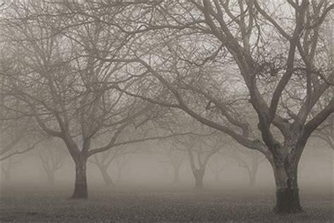 Image result for Winter Fog Orchard