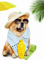 Image result for dog with sunscreen