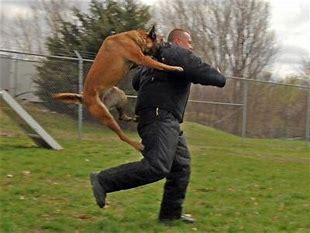 飛びかかる犬 に対する画像結果