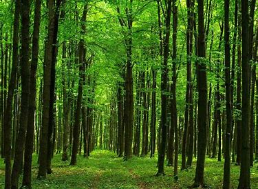 Image result for walk in the forest