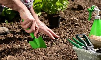 Image result for digging a hole for planting