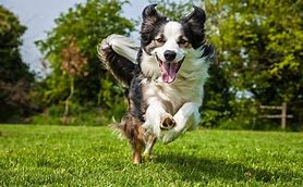 Image result for dogs running