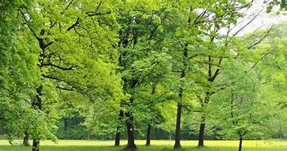 Résultat d'images pour arbre