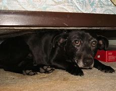 Image result for dog hiding under bed