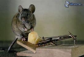 Résultat d'images pour images piège à rats