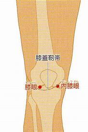 内膝眼 外膝眼 に対する画像結果