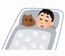 犬と寝る いらすとや に対する画像結果
